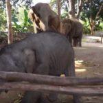 バーンタークラン・エレファント・ビレッジ(Ban TaKlang Elephant Village)